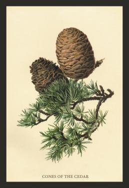 Cones of the Cedar by W.h.j. Boot