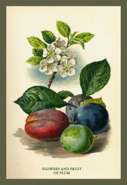 Flowers and Fruit of a Plum by W.h.j. Boot