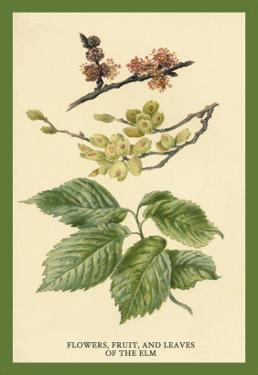 Flowers, Fruits and Leaves of the Elm by W.h.j. Boot