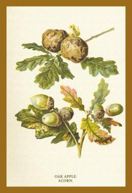 Oak Apple Acorn by W.h.j. Boot