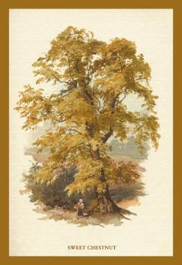 Sweet Chestnut by W.h.j. Boot