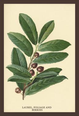 The Laruel. Foliage and Berries by W.h.j. Boot