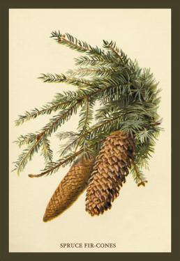 The Spruce Fir-Cones by W.h.j. Boot
