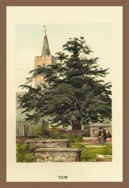 The Yew by W.h.j. Boot