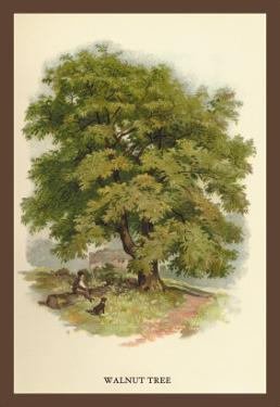 Walnut Tree by W.h.j. Boot