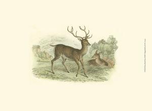 Petite Red Deer by W^h^ Lizars