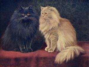 Blue, Cream Persian Cats by W. Luker