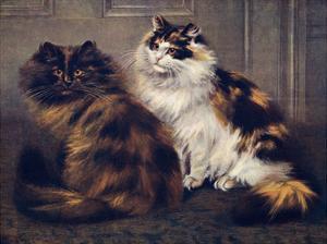 Tortoiseshell Persians by W. Luker