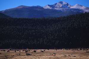 Elk Herd near Long's Peak by W. Perry Conway