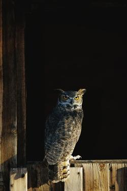 Great Horned Owl by W^ Perry Conway