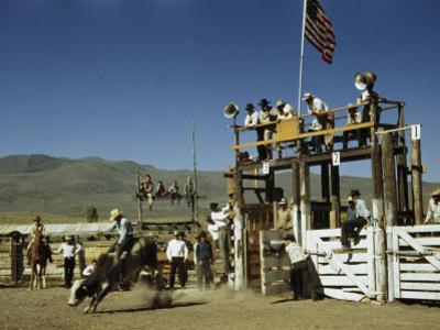 Cowboy Rides a Bucking Bull at a Rodeo