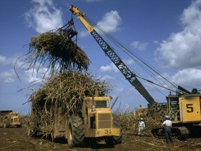 Men Watch Crane with Grab Attachment Load Sugar Cane into Hauler