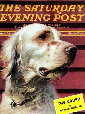 """Springer Spaniel,"" Saturday Evening Post Cover, November 16, 1940 by W.W. Calvert"