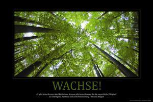 Wachse! (German Translation)