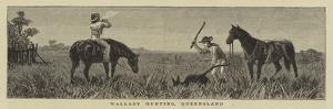 Wallaby Hunting, Queensland