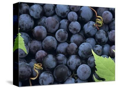 A Harvest of Juicy Concord Grapes (Vitis Labrusca) by Wally Eberhart