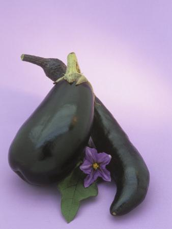 Eggplants and their Leaf and Flower (Solanum Melongena) by Wally Eberhart