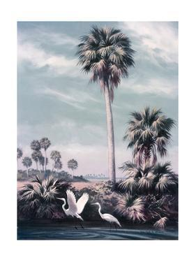 Egrets Forage in Marshy Shallows Near Tall Cabbage Palmetto by Walter A. Weber