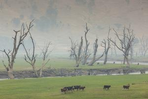 Australia, Victoria, Huon, Lake Hume with Forest Fire Smoke by Walter Bibikow