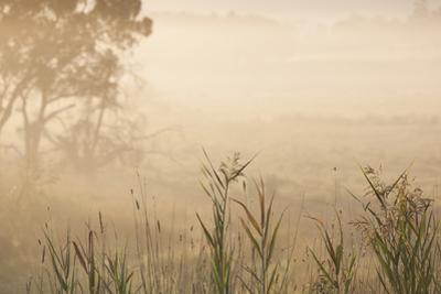 Australia, Victoria, Yarra Valley, Healesville, Field with Fog, Dawn by Walter Bibikow