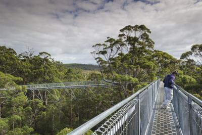 Australia, Walpole Nornalup, Valley of the Giants Tree Top Walk