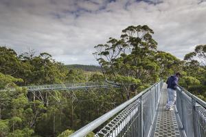 Australia, Walpole Nornalup, Valley of the Giants Tree Top Walk by Walter Bibikow