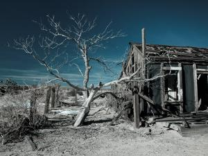 California, Cima, Mojave National Preserve, Abandoned Mojave Desert Ranch, Winter, USA by Walter Bibikow