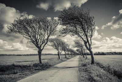 Denmark, Jutland, Mogeltonder, Country Road and Wind-Bent Trees by Walter Bibikow