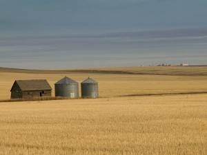 Grain Barn on Wheat Farm in Rosebud, Alberta, Canada by Walter Bibikow