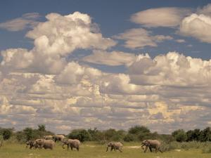 Herd of Elephants, Etosha National Park, Namibia by Walter Bibikow