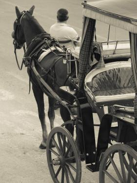 Horse Carriages at Pinto Wharf, Floriana, Valletta, Malta by Walter Bibikow