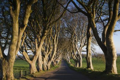 Ireland, County Antrim, Ballymoney, The Dark Hedges road by Walter Bibikow