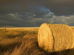 Landscape and Hay Roll in Alberta, Canada by Walter Bibikow