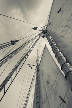 Massachusetts, Gloucester, Schooner Festival, Sails and Masts by Walter Bibikow