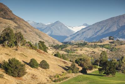 New Zealand, South Island, Otago, Wanaka, vineyard on Lake Wanaka by Walter Bibikow