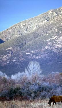 Nm, Taos, Sangre De Christo Mountains by Walter Bibikow