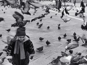 Pigeons in Piazza San Marco, Venice, Veneto, Italy by Walter Bibikow
