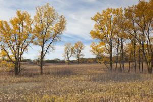 Prairie Grassland, Beatrice, Nebraska, USA by Walter Bibikow