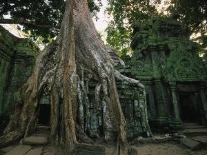 Ta Prohm, 400-year-old Tree, Cambodia by Walter Bibikow