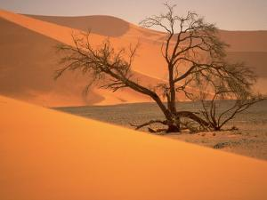 Tree in Namibia Desert, Namibia, Africa by Walter Bibikow