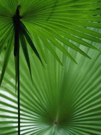 Tropical Grasses, Nadi, Viti Levu by Walter Bibikow