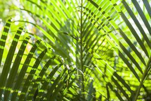 U.S. Virgin Islands, St. Thomas. St. Peter, tropical vegetation by Walter Bibikow