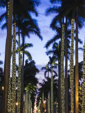 USA, Florida, Palm Beach, Palms on Royal Palm Way by Walter Bibikow