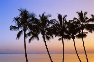 USA, Hawaii, Molokai. Palm Tree, Morning by Walter Bibikow