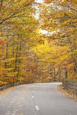 USA, Maine, Mt. Desert Island. Acadia National Park road. by Walter Bibikow