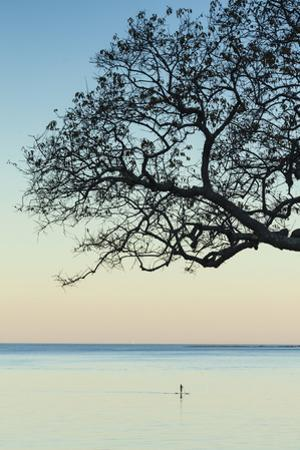 USA, Massachusetts, Cape Ann, Rockport, tree over Front Beach at dusk by Walter Bibikow