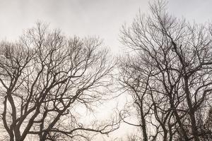 USA, Massachusetts, Cape Cod, Provincetown. Bare tree. by Walter Bibikow
