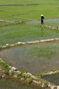 Vietnam, Dien Bien Phu. Rice Fields by Walter Bibikow