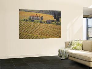 Vineyard, Greve in Chianti, Tuscany, Italy by Walter Bibikow