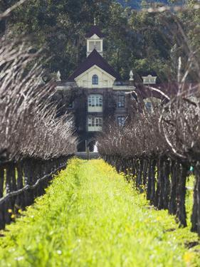 Vineyard in Winter, Rubicon Estate Vineyard, Rutherford, Napa Valley Wine Country, California, Usa by Walter Bibikow